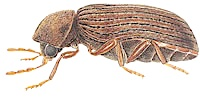 anti carii de lemn, combate insectele care distrug mobilierul, mobila distrusa din cauza gandacilor, cum protejez mobila de daunatori, scapa de carii de lemn, combate carii de lemn, anticarii