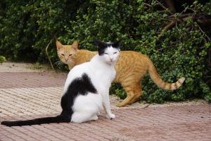 ultrasunete pisici, sperietoare pisici