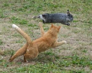 poze-iepuri-haioase-pisici