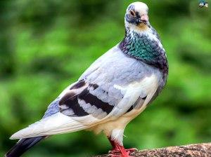 birds-90v